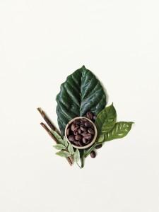 Botanical_Kinetics_ingredient_image
